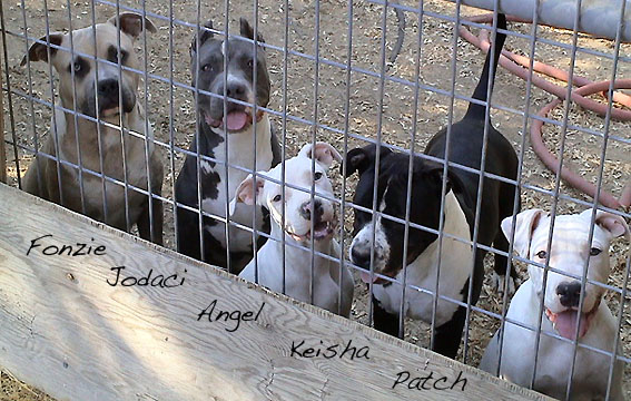 Pitfall Kennel Outkast Pitbull Ranch Wallpaper | Dog Breeds Picture